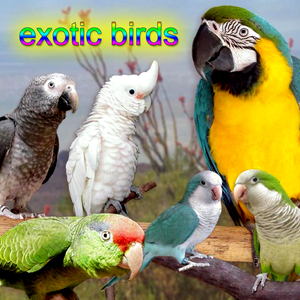 Listen Free to Bird Sounds - Sparrow Call Radio | iHeartRadio