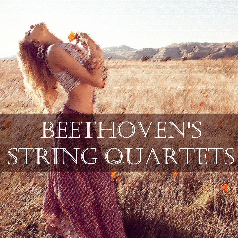 Listen Free to Amadeus Quartet - String Quartet No  16 in F Major