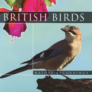 Listen Free to Global Journey - British Birds - Tree Pit