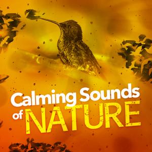 Listen Free to Calm Bird Sounds - Pondland Birds Radio | iHeartRadio