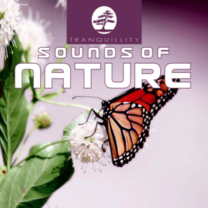 Ambient Sounds Of Nature Part 3 - Original